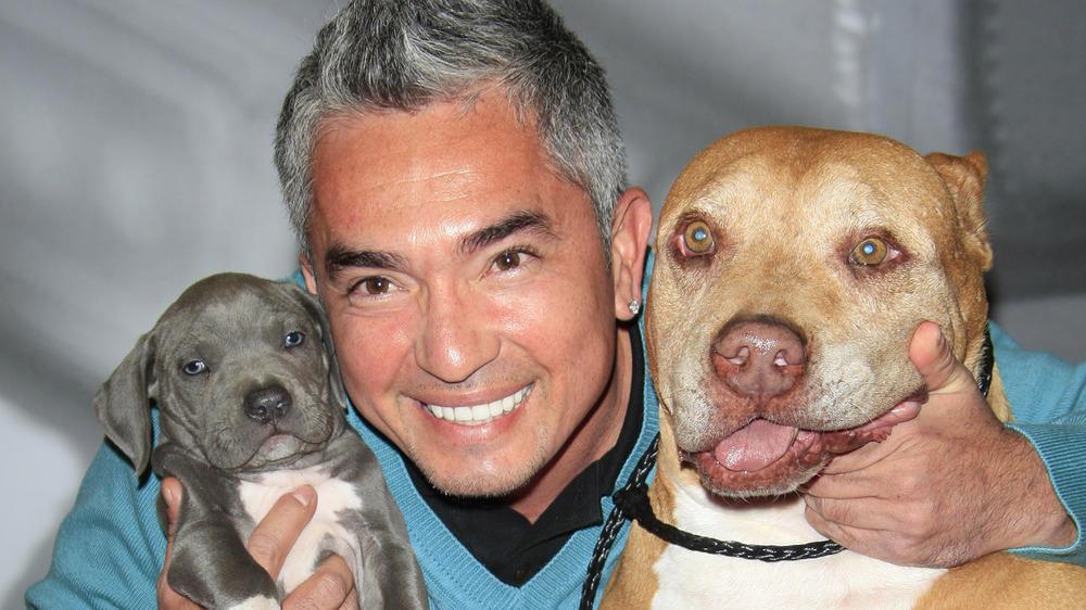 Hundeflüsterer Cesar Millan Tod